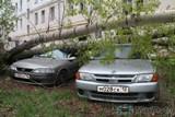 В Йошкар-Оле упавшее дерево придавило два автомобиля
